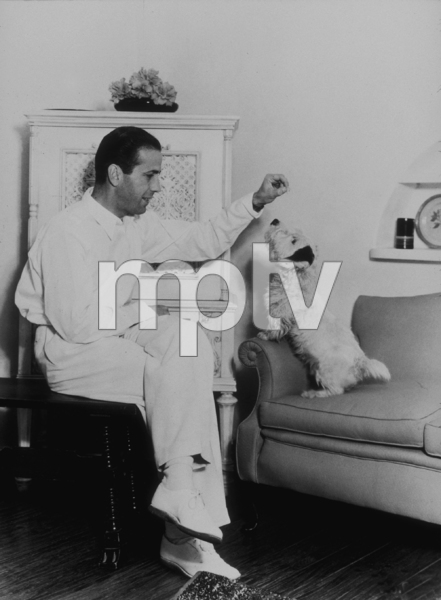 Humphrey Bogart feeding his dog, circa 1947.MPTV - Image 0015_0041