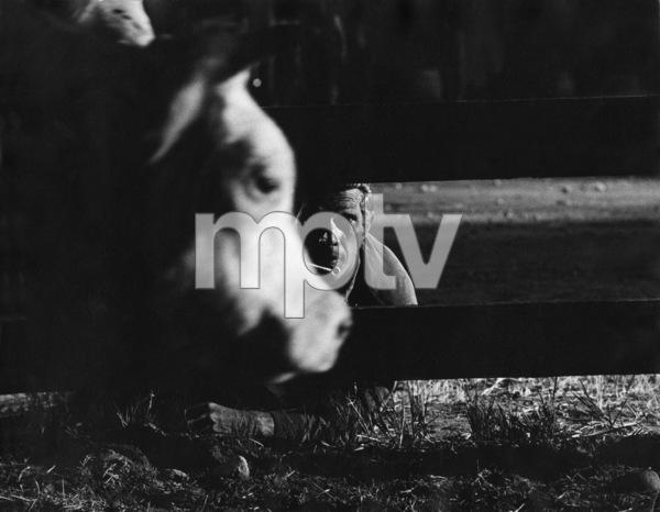 """""""Nevada Smith""""Steve McQueen1966 © 1978 Chester Maydole - Image 0019_1118"""