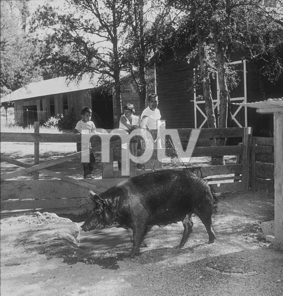 Tennessee Ernie Ford with his wife, Betty, sons, Brion and Jeffery, and a pig at their ranch in Clear Lake, CA, 1957. © 1978 Sid Avery MPTV - Image 0064_0008