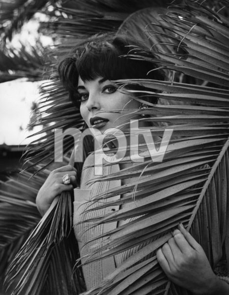 Joan Collinscirca 1960s© 1978 Mario Casilli - Image 0299_0016