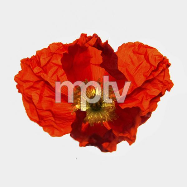 Flowerscirca 2000s© 2000 Joe Webster - Image 13675_0035