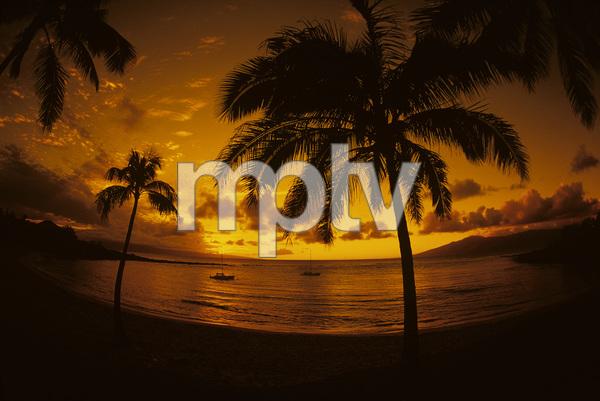 Sunsets / Hawaii1974 © 1978 Ron Avery - Image 13696_0006