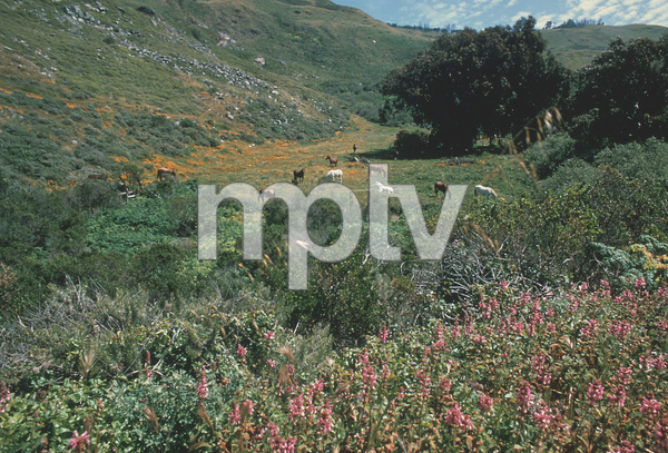 Scenics (mountains)Calabasas CA.1981 © 1981 Sid Avery - Image 14811_0002
