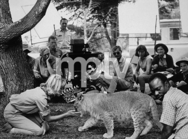 """Born Free,""Virginia McKenna1966 / Columbia © 1978 John Jay - Image 16286_0008"