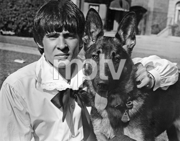 THE MONKEES, Davy Jones with pet german shepherd, late 1960