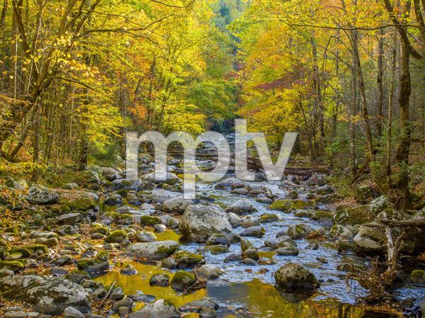 Great Smoky Mountains National Park, Tennessee2016© 2017 Viktor Hancock - Image 24366_0085