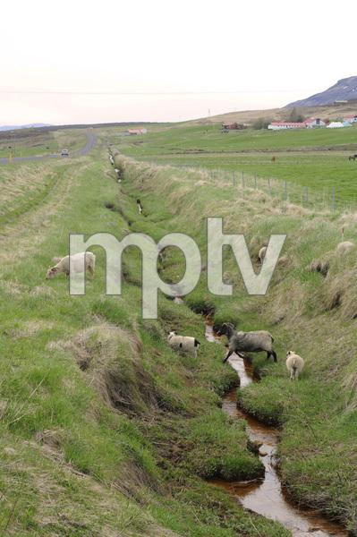 Iceland2015© 2015 Dana Edelson - Image 24367_0015