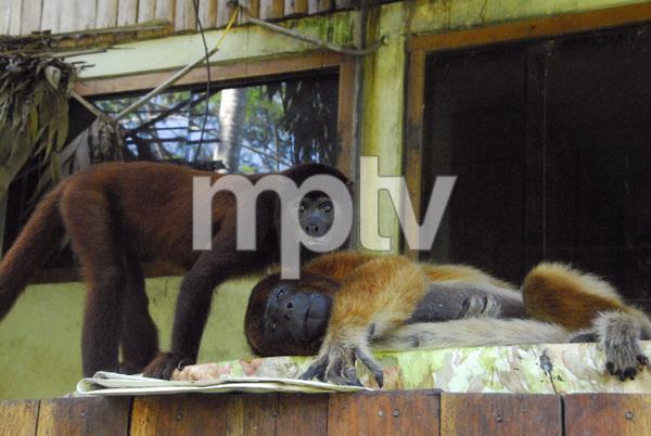 Peru2011© 2011 Dana Edelson - Image 24367_0086