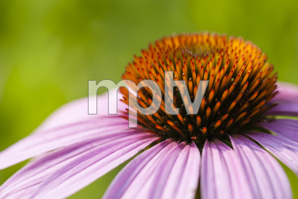 Daniel Stowe Botanical Garden, Belmont, North Carolina2011© 2011 Deede Denton - Image 24368_0012