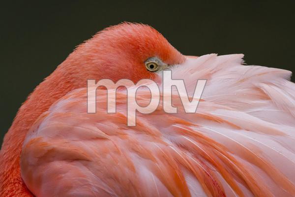 Sylvan Heights Bird Park, Scotland Neck, North Carolina2015© 2015 Deede Denton - Image 24368_0060