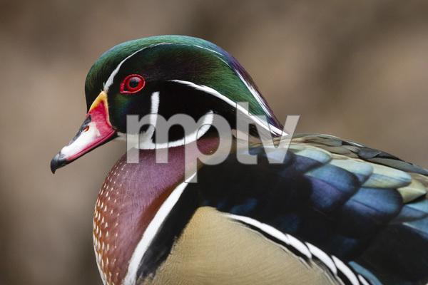 Sylvan Heights Bird Park, Scotland Neck, North Carolina2015© 2015 Deede Denton - Image 24368_0061