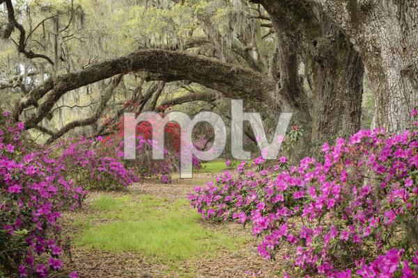 Magnolia Plantation, Charleston, South Carolina2016© 2016 Deede Denton - Image 24368_0136