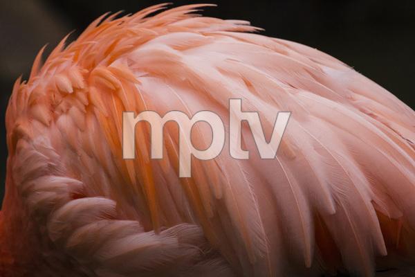 Sylvan Heights Bird Park, Scotland Neck, North Carolina2015© 2015 Deede Denton - Image 24368_0179
