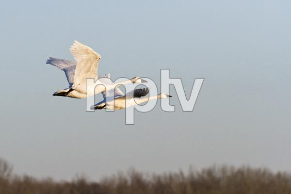 Pocosin Lakes National Wildlife Refuge, North Carolina2015© 2015 Deede Denton - Image 24368_0180