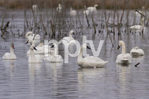 Pocosin Lakes National Wildlife Refuge, North Carolina2015© 2015 Deede Denton - Image 24368_0182