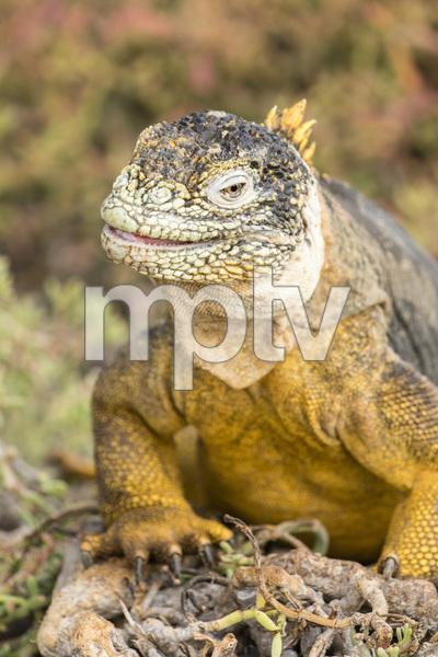South Plaza, Galapagos Islands, Ecuador2016© 2016 Deede Denton - Image 24368_0226