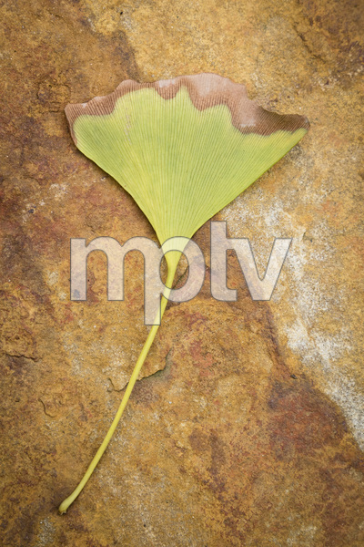 UNCC Botanical Gardens, Charlotte, North Carolina2016© 2016 Deede Denton - Image 24368_0255