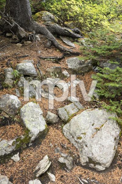 Moraine Lake, Banff National Park, Alberta, Canada2017© 2017 Deede Denton - Image 24368_0373