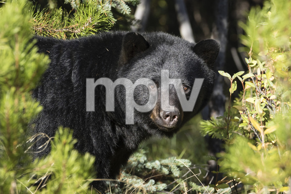 Bow Valley Parkway, Banff National Park, Alberta, Canada2017© 2017 Deede Denton - Image 24368_0374