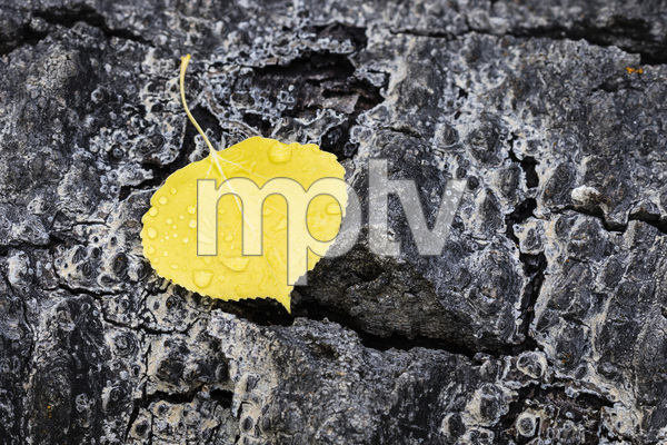 Jasper National Park, Alberta, Canada2017© 2017 Deede Denton - Image 24368_0389