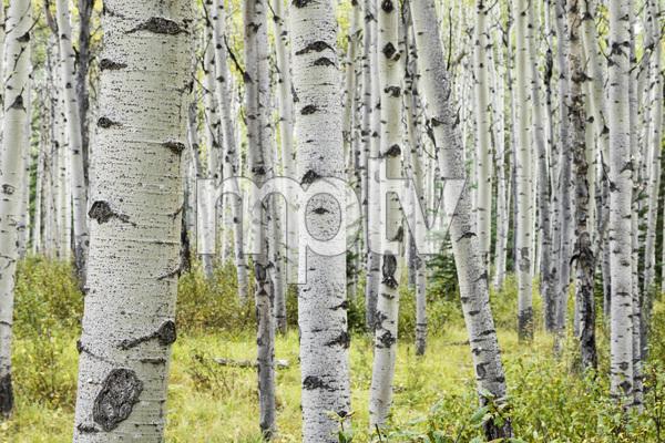 Jasper National Park, Alberta, Canada2017© 2017 Deede Denton - Image 24368_0394