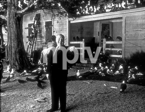 """""""The Birds,""""Alfred Hitchcock.1963 Universal - Image 3302_0007"""