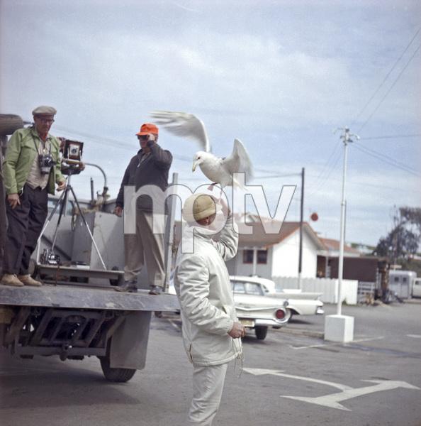 "Bird trainer Ray Berwick on ""The Birds"" movie set at Bodega Bay in California1961 © 1978 John Bressie - Image 3302_0058"