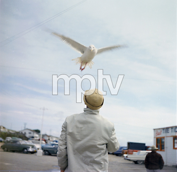 "Bird trainer Ray Berwick on ""The Birds"" movie set at Bodega Bay in California1961 © 1978 John Bressie - Image 3302_0060"
