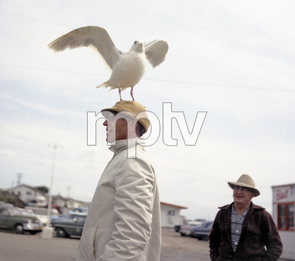 "Bird trainer Ray Berwick on ""The Birds"" movie set at Bodega Bay in California1961 © 1978 John Bressie - Image 3302_0061"
