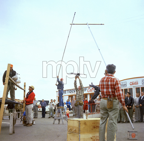 "Bird trainer Ray Berwick on ""The Birds"" movie set at Bodega Bay in California1961 © 1978 John Bressie - Image 3302_0069"