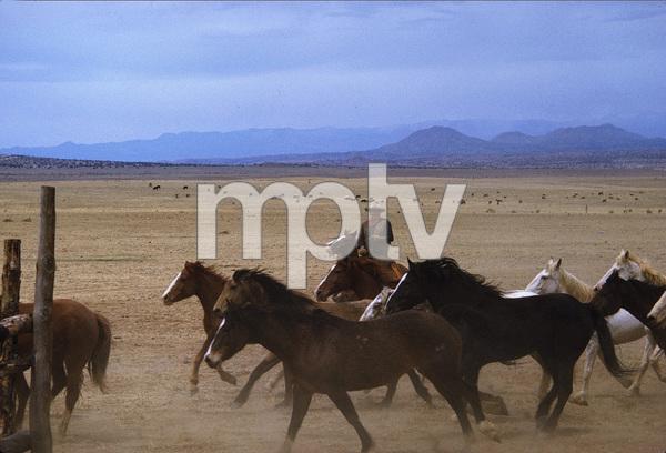 """The Cowboys,"" John WayneWarner Bros. 1971. © 1978 David Sutton - Image 3370_0635"