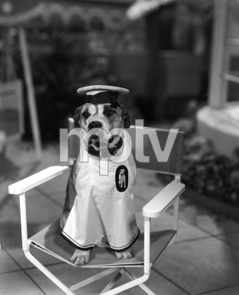 """""""Our Gang""""Pete the Dogc. 1935Hal Roach Productions**I.V. - Image 3636_0069"""