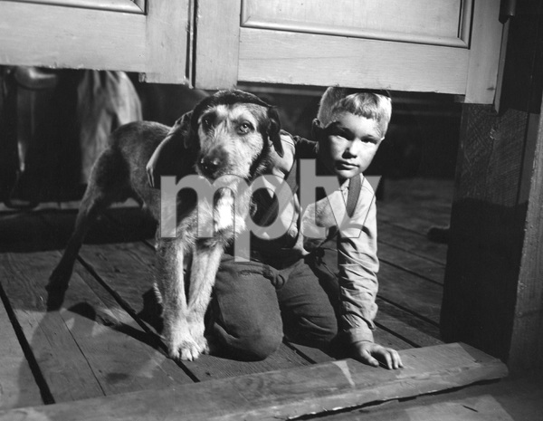 Brandon De Wilde, SHANE, Paramount, 1953, I.V. - Image 3715_0027
