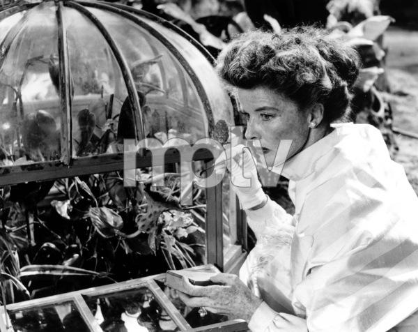 Suddenly Last SummerKatharine Hepburn1959 Columbia / **I.V. - Image 3756_0036
