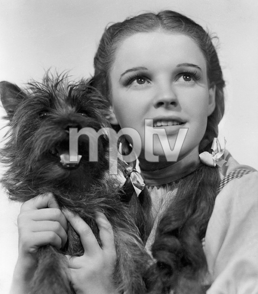 """The Wizard of Oz""Judy Garland, Toto1939 MGM** I.V. - Image 3823_0155"