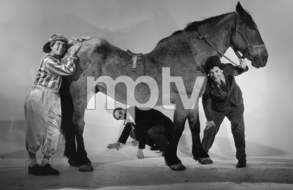 """The Marx Brothers (Harpo, Groucho, Chico) with a horse for """"A Day at the Races"""" 1936 © 1978 Ted Allan - Image 3891_57"""