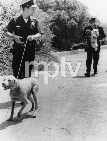 Police at the home of Sharon Tate and Roman Polanski in Beverly Glen, CaliforniaAugust 1969 - Image 4203_0057