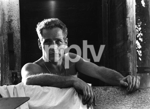 COOL HAND LUKE, Paul Newman, WB,  I.V. - Image 5788_0007