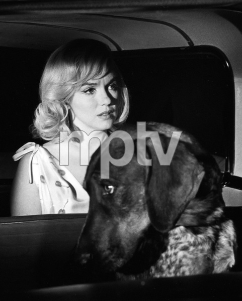 """The Misfits""Marilyn Monroe1961 MGM** I.V. - Image 9559_0080"