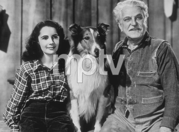 """""""Courage of Lassie""""Elizabeth Taylor, Lassie and Frank Morgan1946 MGM**R.C.MPTV - Image 9603_0001"""