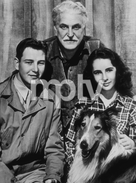 """Courage of Lassie""Elizabeth Taylor, Lassie, Frank Morgan and Tom Drake1946 MGM**R.C.MPTV - Image 9603_0002"