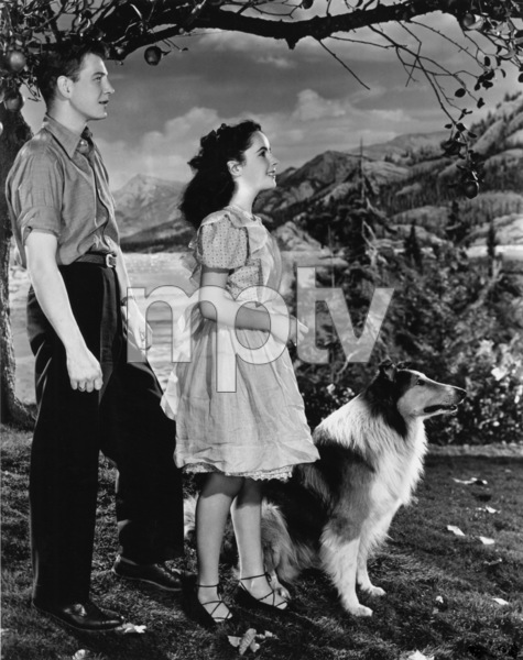 """Courage of Lassie""Elizabeth Taylor, Lassie, Tom Drake1946 MGM - Image 9603_0003"