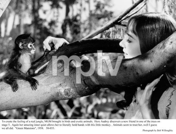 """Green Mansions""Audrey Hepburn1958 / MGM(c) 1978 Bob Willoughby - Image 9687_0150"